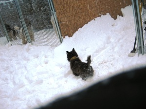 Grendel the Snow Chicken Killer
