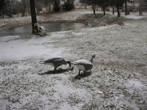 Snow coverd geese